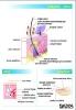 anatomia-czlowieka-202-22