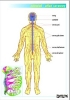 anatomia-czlowieka-202-23