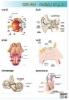 plansze-anatomia-czlowieka-44