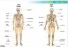plansze-anatomia-czlowieka-46