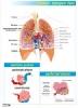 plansze-anatomia-czlowieka-47