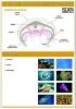 plansze-anatomia-zwierzat-10