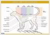 plansze-anatomia-zwierzat-19