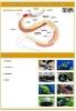 plansze-anatomia-zwierzat-6