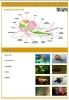 plansze-anatomia-zwierzat-8