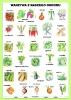 warzywa-z-naszego-ogrodu-1
